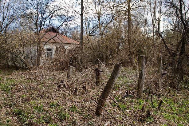 Чорнобиль зона